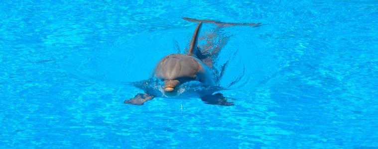 dolphin tourism