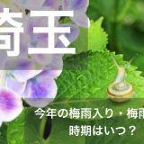 saitama-tsuyu