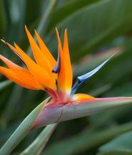bird-of-paradise-bouquet-builder-the-little-flower-shop-florist-london-build-a-bouquet-online