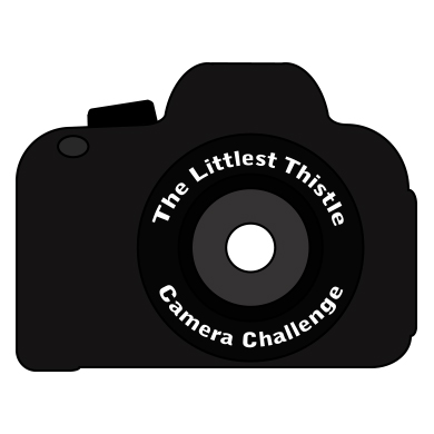 Camera Challenge 8 – Using Natural Light Indoors
