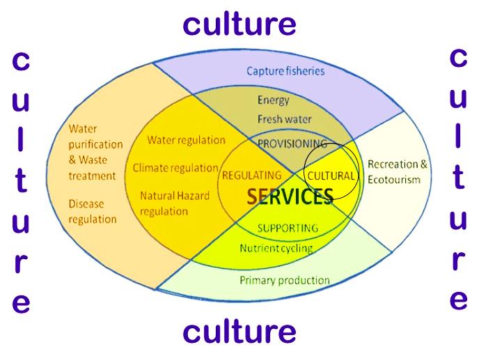 ES and culture adj