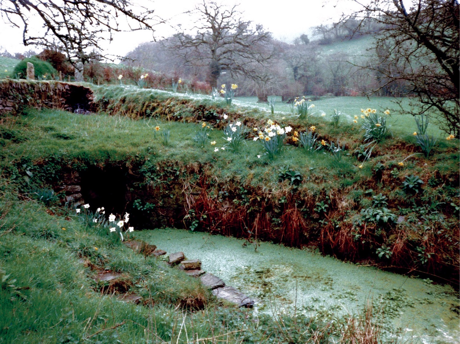 BELOW The Cornish antiquary Richard Carew (1555-1620) noted that St Non's Well, north of Altarnun, Cornwall, was used for 'bowsenning' immersing sick people (especially those regarded as insane) in the hope of a cure. The relics of St Non were distributed widely, her role in giving birth to St David (c.AD 500), patron saint of Wales, being seen as like that of the Virgin, although the virginal St Non conceived David as a result of sexual assault.