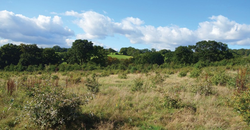 LEFT There are concerns that the proposed changes to the planning system could lead to development in previously protected Green Belt areas.