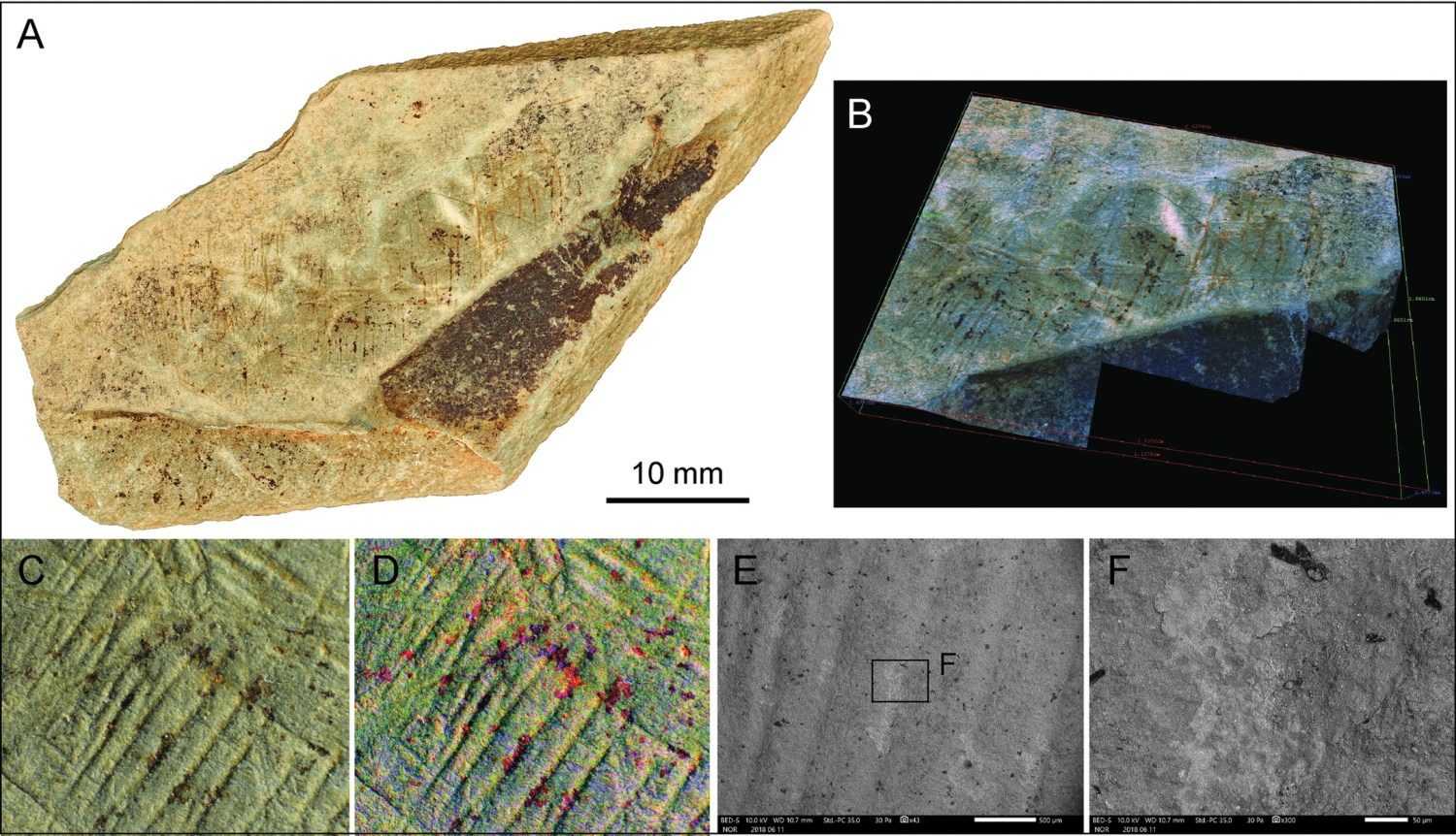 ABOVE Fragment LVE 4395 had patches of what appeared to be red staining on its engraved surfaces. Detailed imaging created during analysis of the marks highlighted the different coloration, but ultimately no difference in mineral make-up was identified and unlike on plaquettes from continental Europe the Les Varines finds are not thought to have been enhanced with pigment.