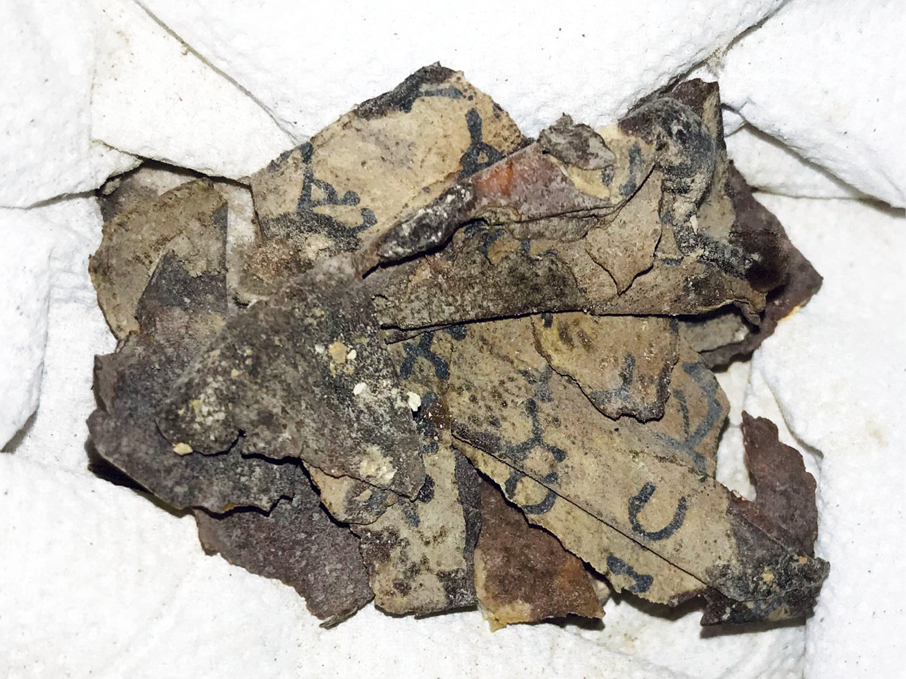 ABOVE LEFT The fragments of a biblical scroll discovered in the Cave of Horror in the Judaean Desert.