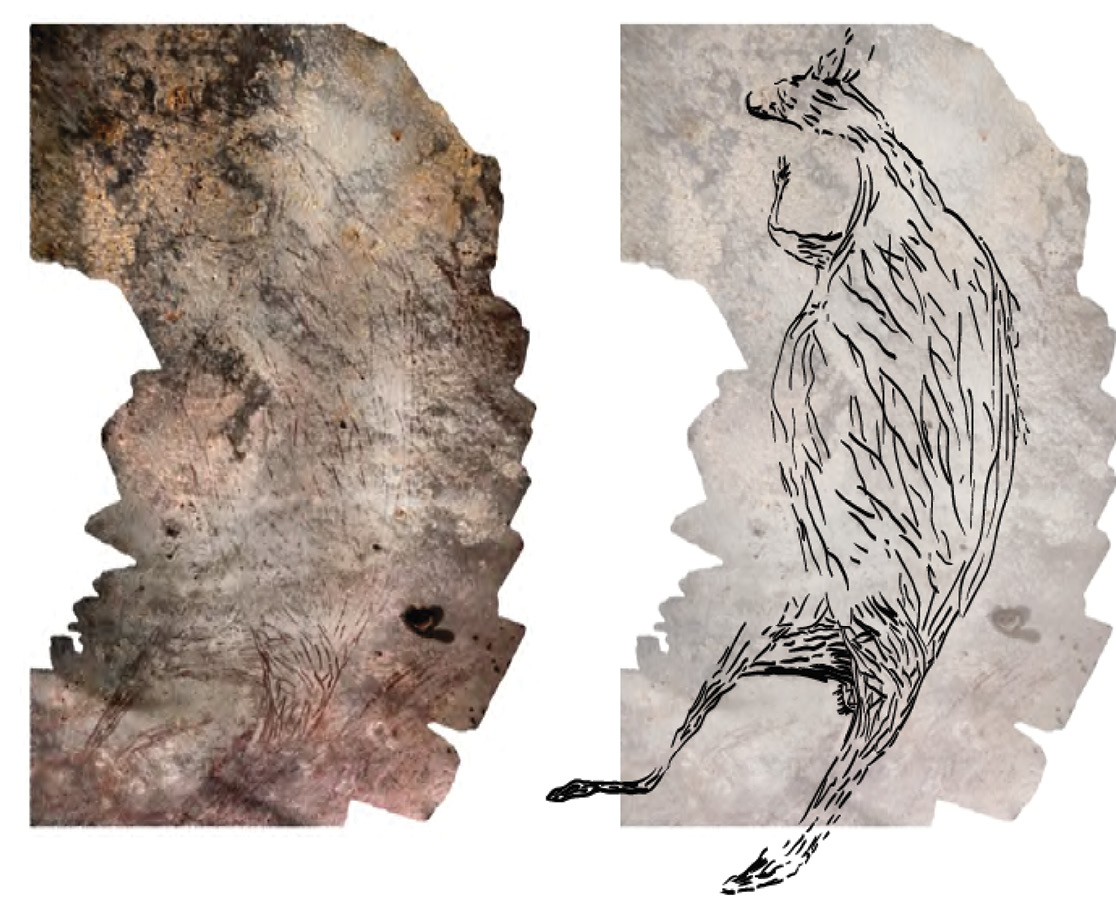 above This 2m-long painting of a kangaroo shown as a montage made from 39 photographs on the left and as an illustration on the right is Australia's oldest known in situ cave painting, dating back c.17,300