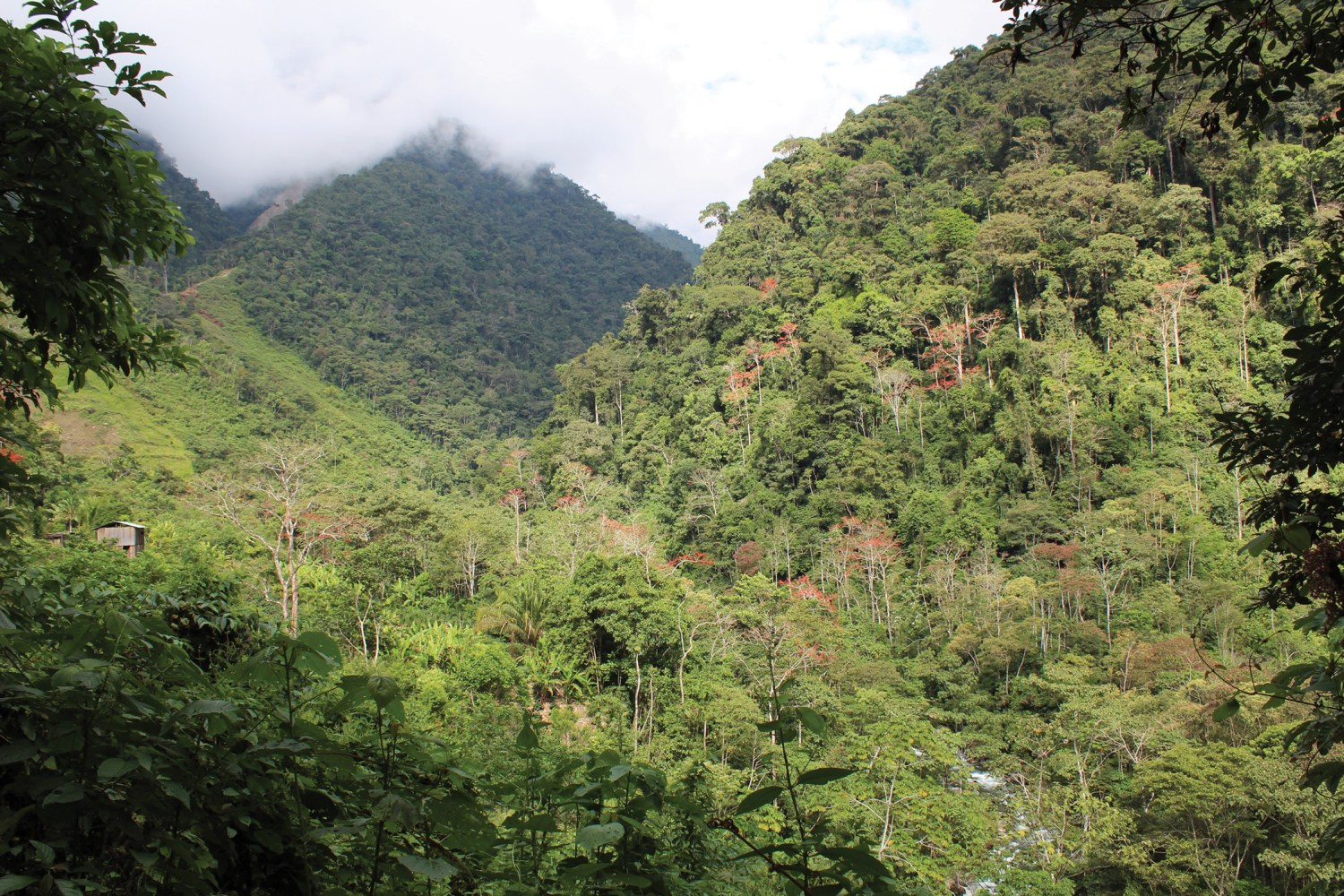 ABOVE The location of Cedrocucho. This photograph shows the steep-sided and heavily vegetated mountain where ruins were recently encountered during forest-clearance work (location circled in red). BELOW This 1m-wide wall seems to mark the lower eastern boundary of the site. At one end, it connects to a cliff, while at the other it reportedly reaches a ravine.
