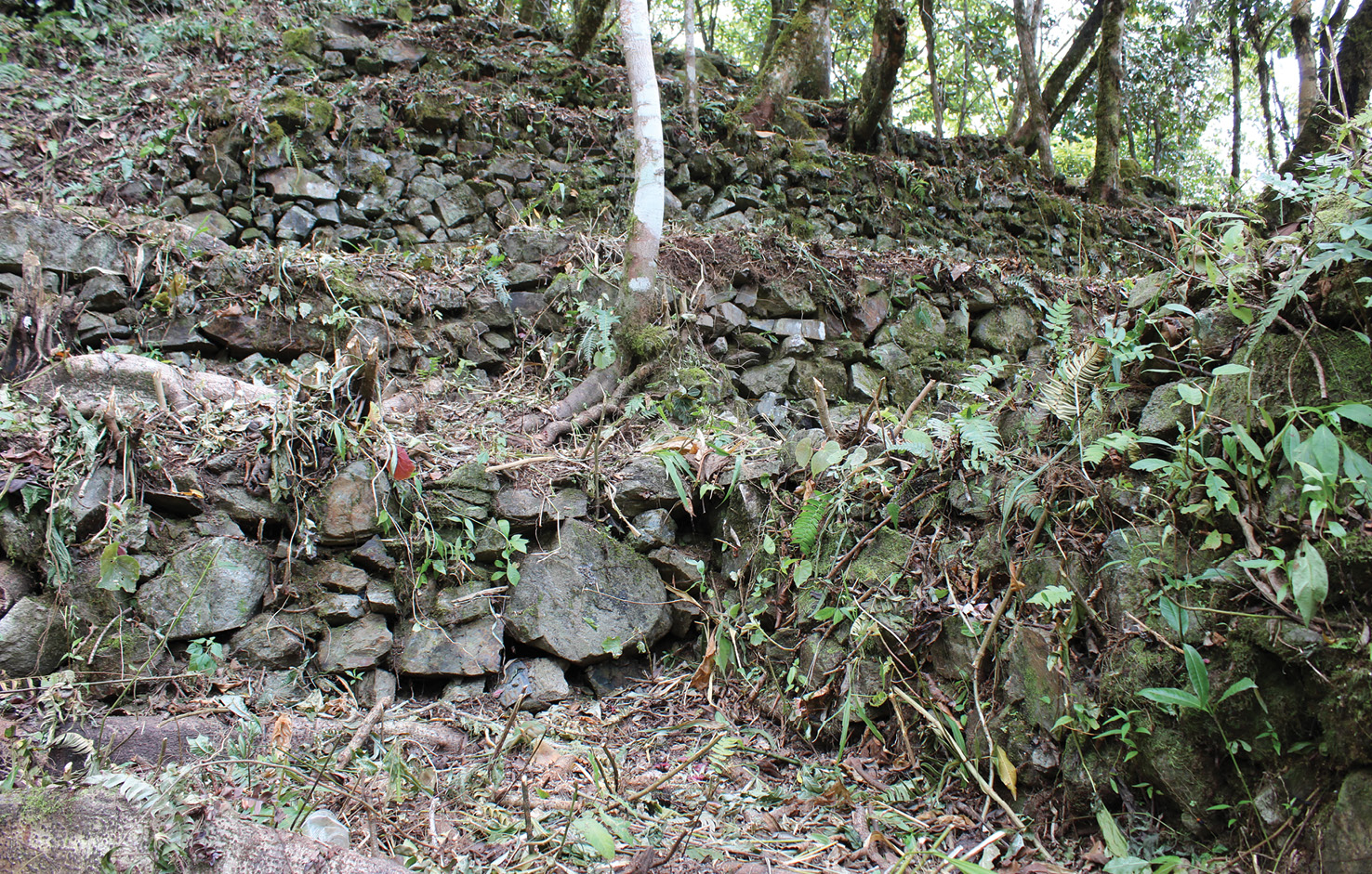BELOW The most widespread feature of Cedrocucho are the terraces assembled on the steeply sloping ground including these ones, in the lower portion of the site.