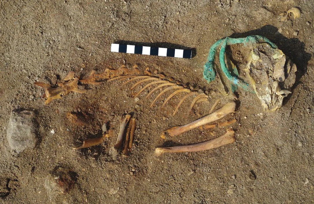 BELOW RIGHT The presence of metal collars and bead necklaces in some of the animals' graves indicates that they were highly valued in life.