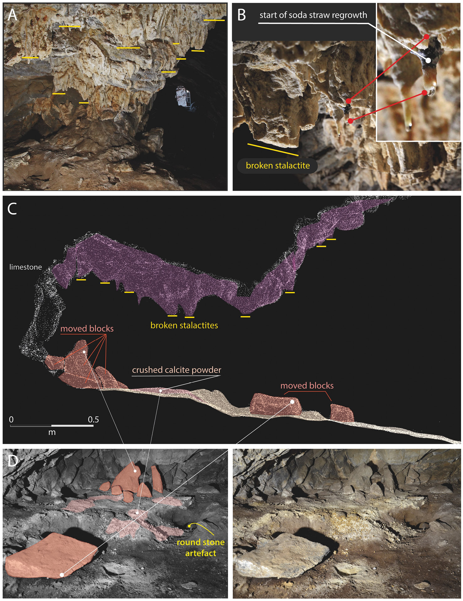 above An alcove in the upper chamber of Cloggs Cave produced intriguing traces of earlier activity. This image shows: (A) broken stalactite stumps on the alcove's ceiling; (B) areas of regrowth on the broken stalactites, showing they are not modern breakages; (C) a cross-section of the alcove created using high-resolution LiDAR; (D) a stone arrangement. All of the elements tinted orange in the left-hand photograph were brought from elsewhere, while the crushed calcite powder is also visible.