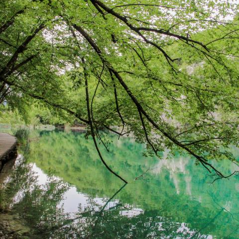 Les lacs de Plitvice en Croatie, un véritable trésor
