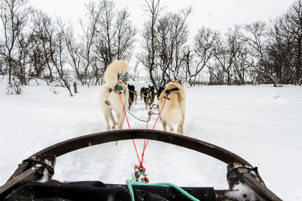Dog Sledding Villmarkssenter