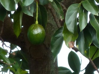 leica-avocado-100-percent-crop