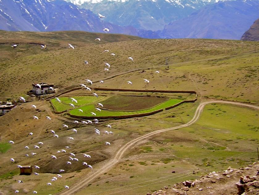 Komic spiti, komik monastery, things to do in spiti valley