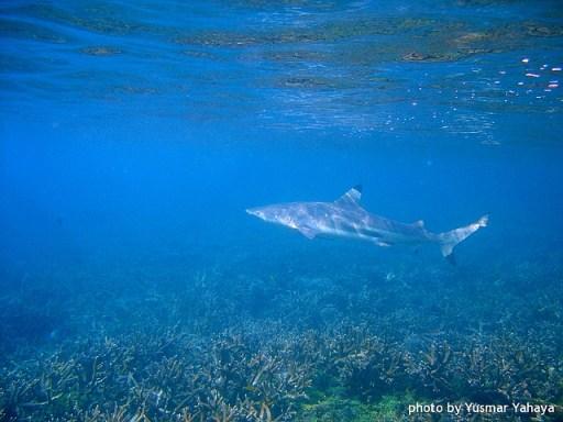 Black tip shark, Pulau Perhentian, Perhentian Islands, Malaysia beaches, travel