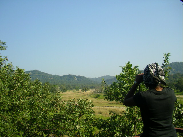 Corbett, Jungle safari, National park, forest