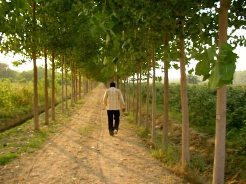 Punjab, countryside, Abohar, Ghallu, mohindra fruit farm