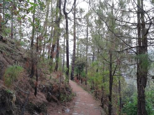 Peora, forests, Kumaon, Uttarakhand, Kumaoni villages, offbeat travel, Indian villages, Himalayan villages, countryside