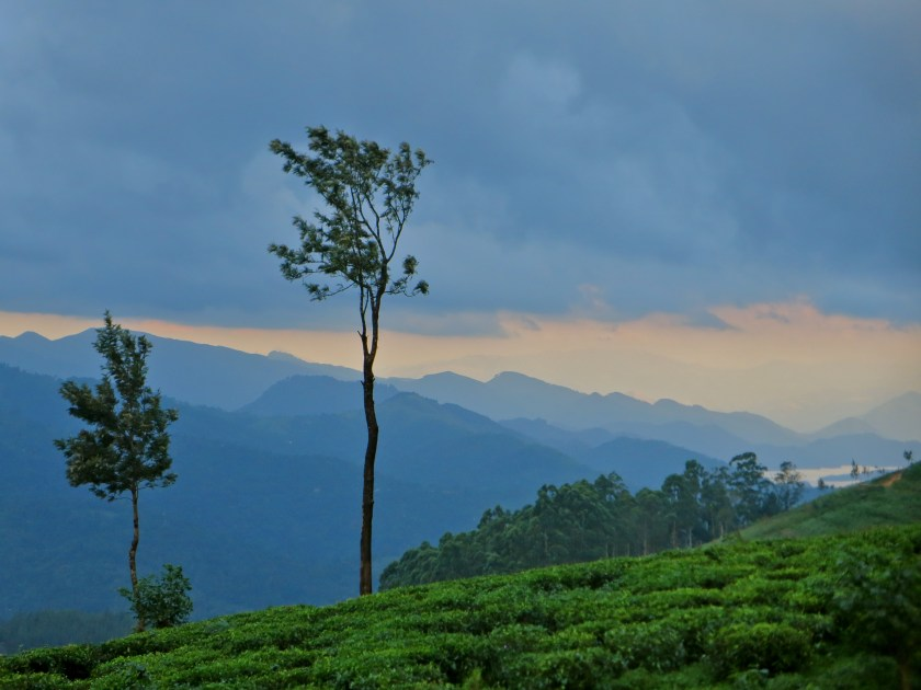 madulkelle tea estate, sri lanka hill country, offbeat sri lanka