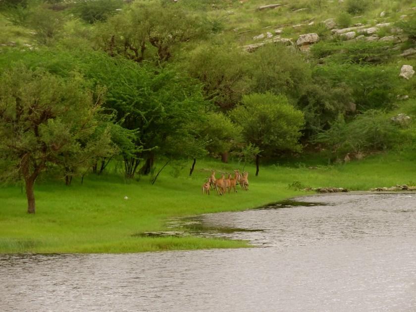 Lakshman Sagar, Pali Rajasthan, Rajasthan wildlife, antelopes