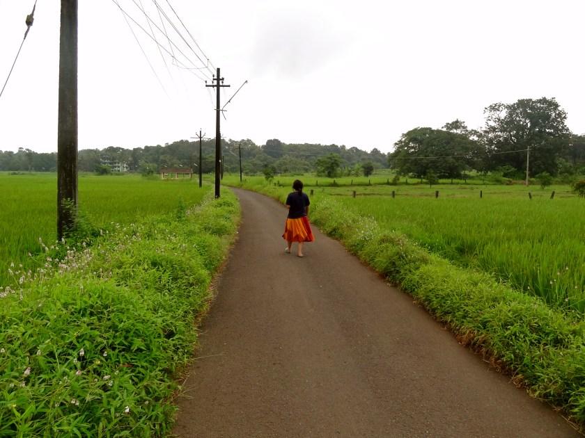 Goa in the monsoon, goa rice paddies, september in goa