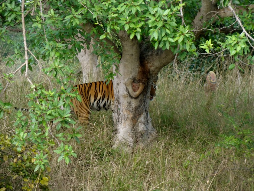 tadoba, tadoba national park, tadoba tiger reserve, tadoba andhari tiger reserve