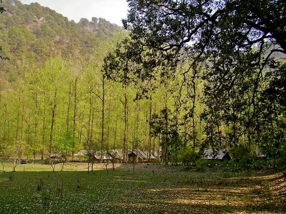 jungle camp sattal, camping uttarakhand