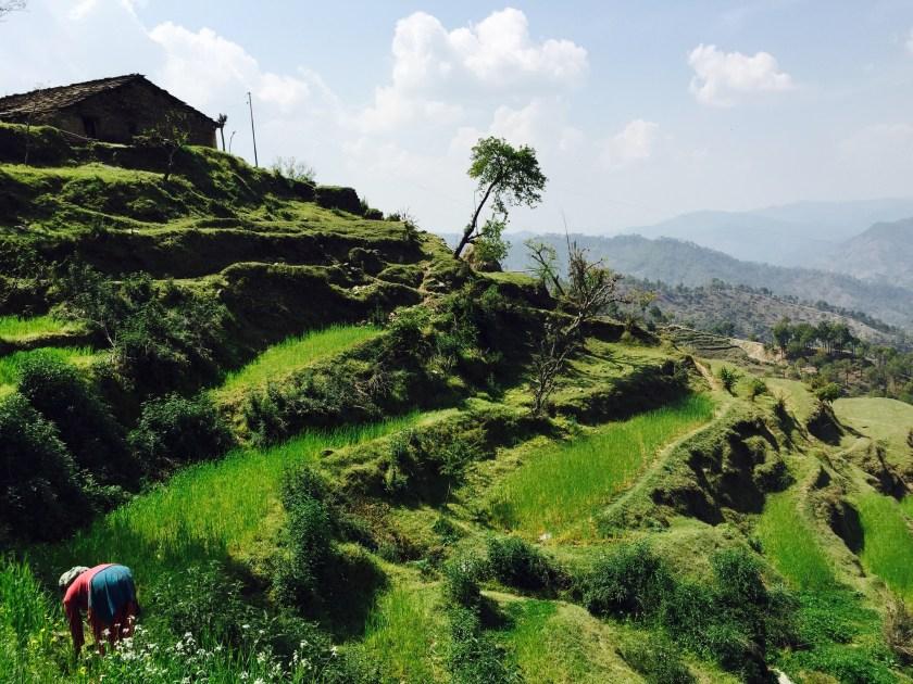 uttarakhand villages, navgaon, kumaon uttarakhand
