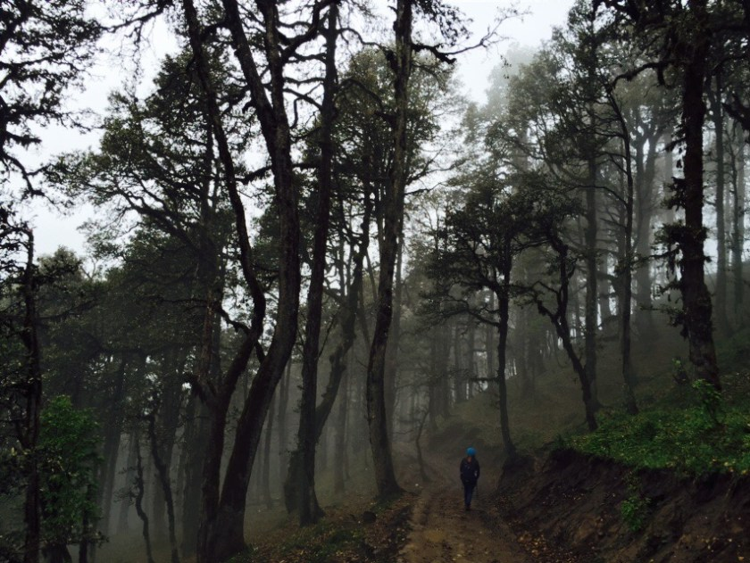 Himachal Pradesh forests