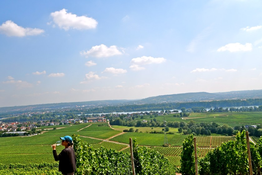 schloss johannisberg, late harvest rieslings, rheingau germany
