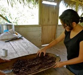 chocolate farm costa rica, bribris costa rica