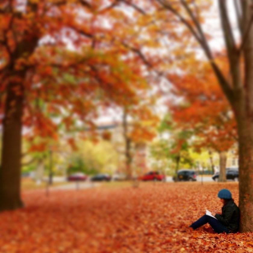 fall color photos, fall new york, fall foliage new york