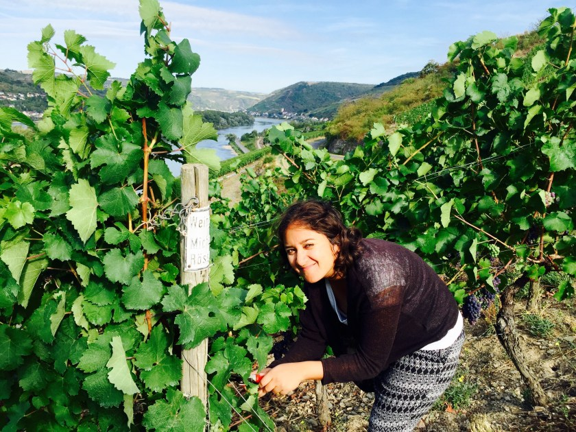 Rossler weingut lorch, lorch germany, living with a wine merchant