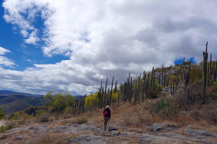 Baja california Sur, road trip mexico, mexico travel blog