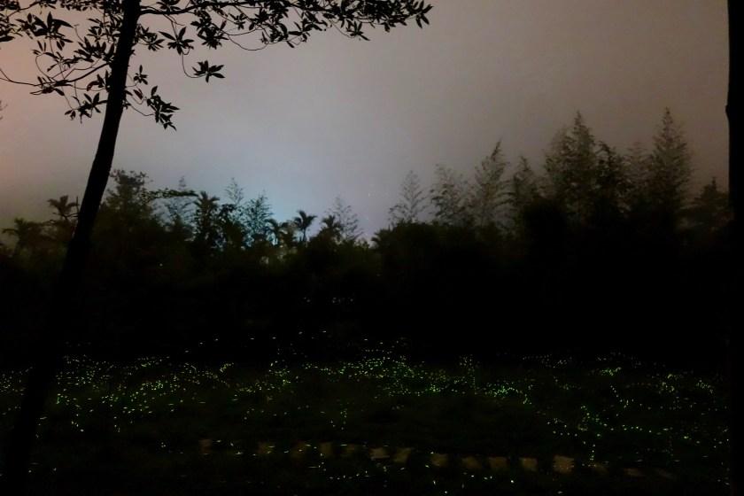 Taiwan fireflies, taiwan travel guide