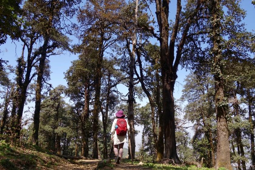 Uttarakhand hiking, Uttarakhand solo travel, Nag tibba solo hike
