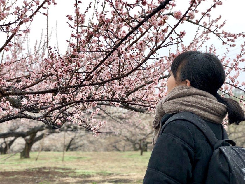 ume japan, plum blossom japan, japanese people