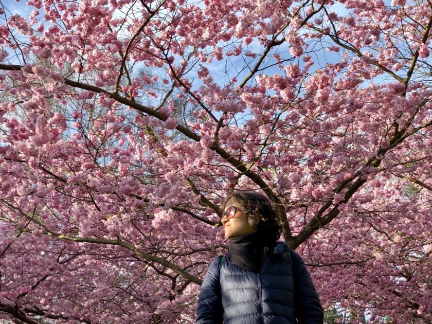 spring copenhagen, sakura copenhagen, cherry blossom copenhagen, alternative things to do in copenhagen
