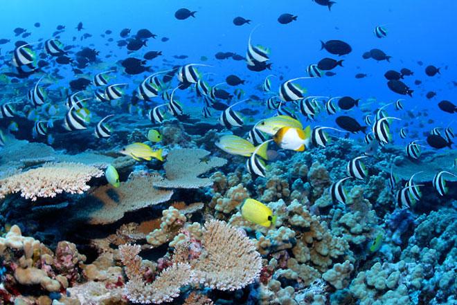 cuba diving, responsible travel cuba, cuba off the beaten track