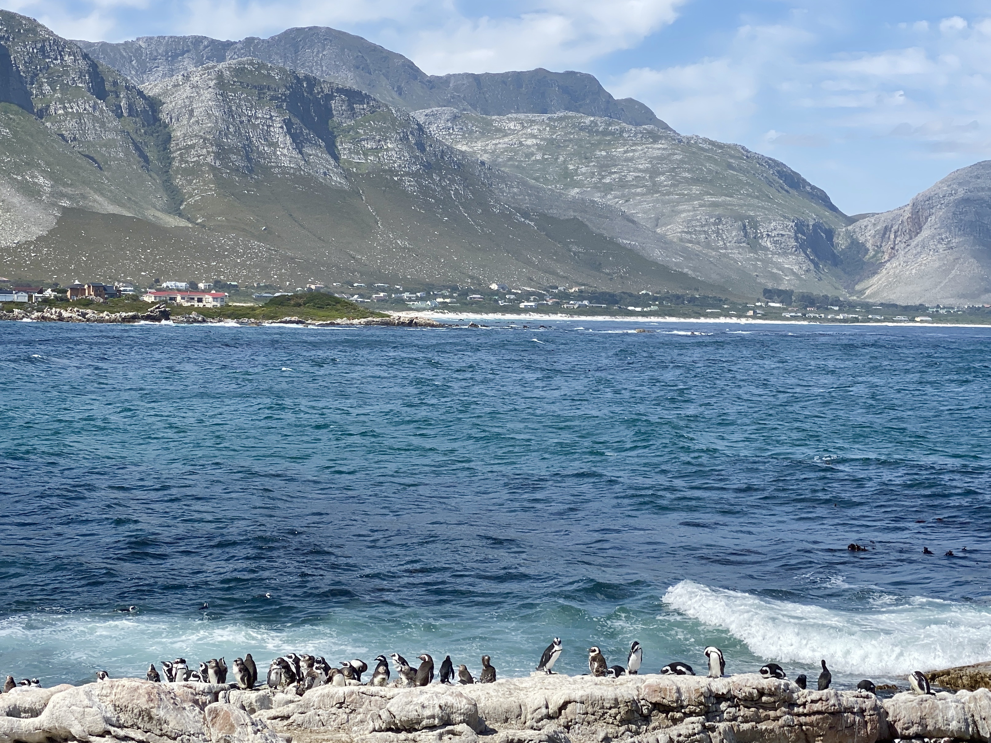 betty's bay penguins