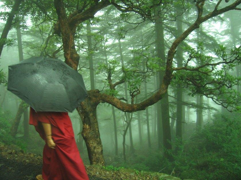 little tibet in india