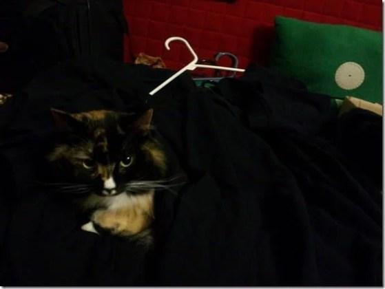 serenade, queen of laundry