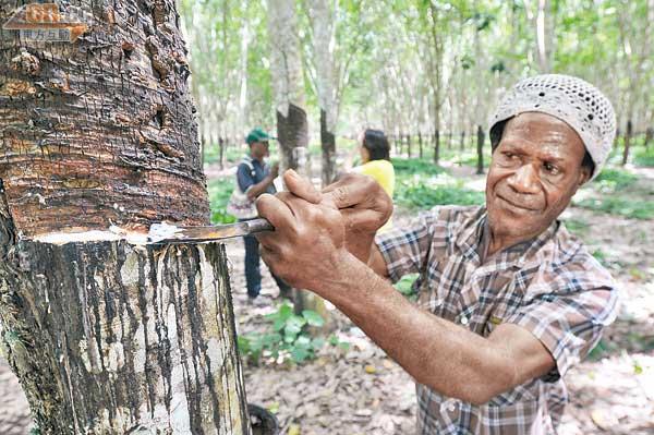 巴布亞新畿內亞樹皮咳水甜到封喉 - 太陽報