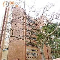 鴨脷洲街坊學校被揭聘無牌教師 - 太陽報
