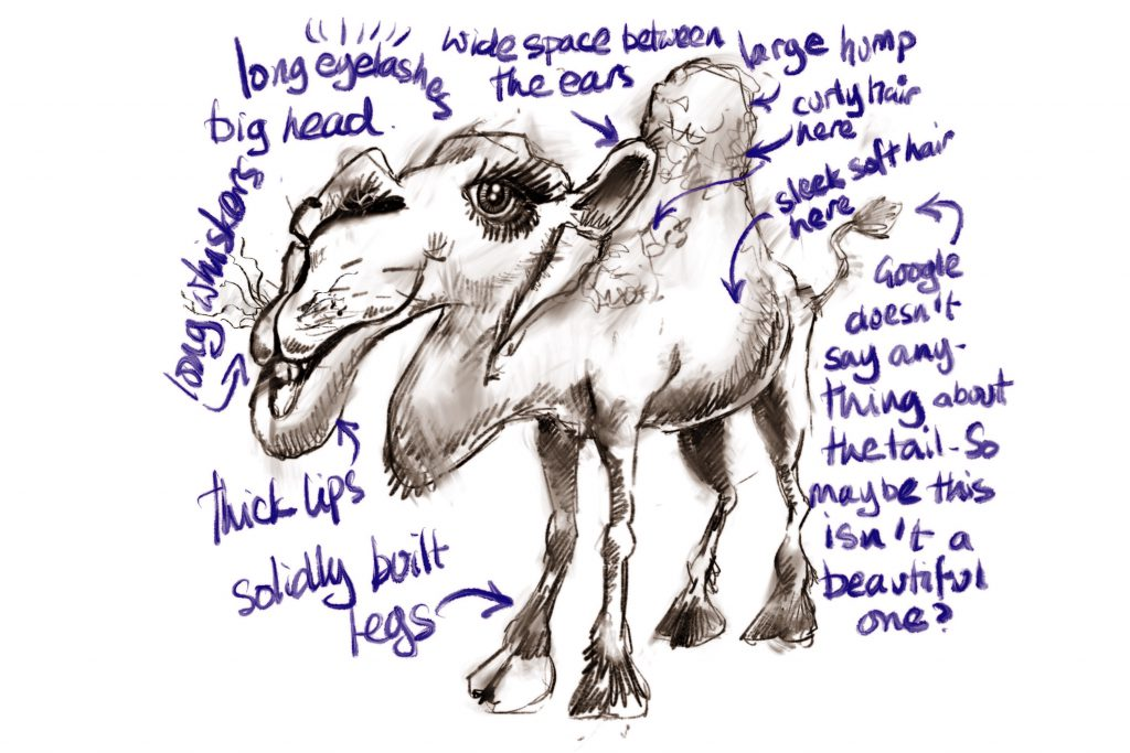 camel pic, beautiful camel drawing, miss camel beauty contest