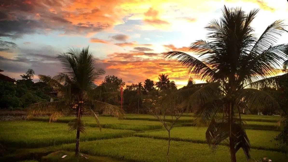 Bali - Zachód słońca nad polami ryżowymi