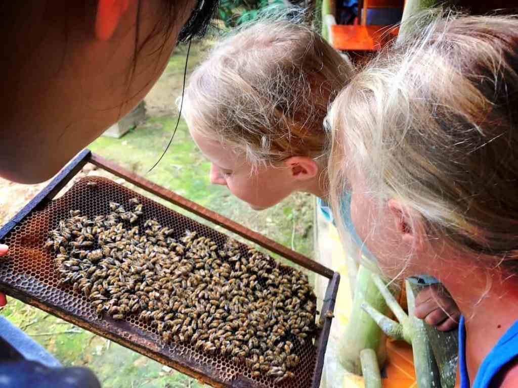 phu quoc with children visiting bee farm with kids was great experience, destination