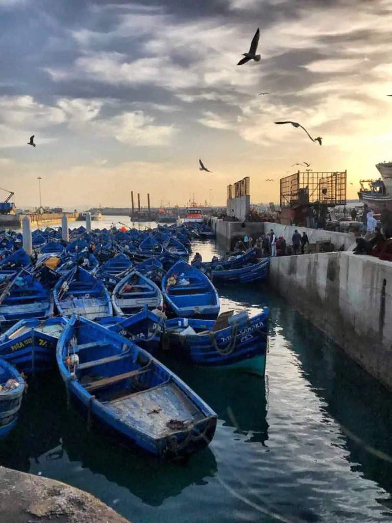 Essaouira fish Port - things to do in Essaouira