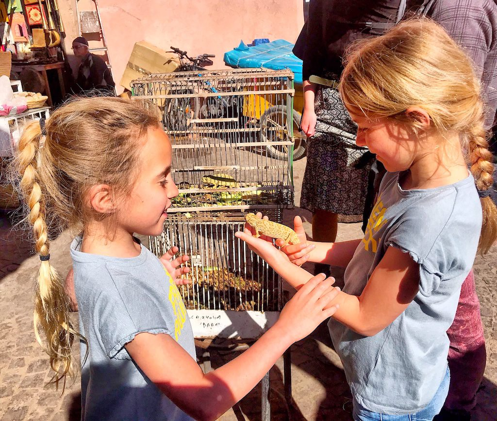 Marrakech souk with kids - playing with chameleon