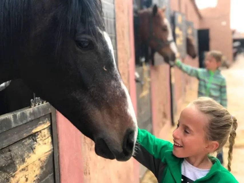 Ouarzazate stables